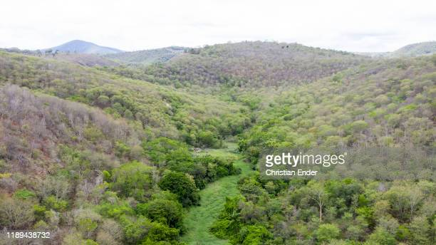 Aerial view of the reforested area next to the headquarter of the Instituto Terra at the beginning of the raining season on November 22, 2019 in...