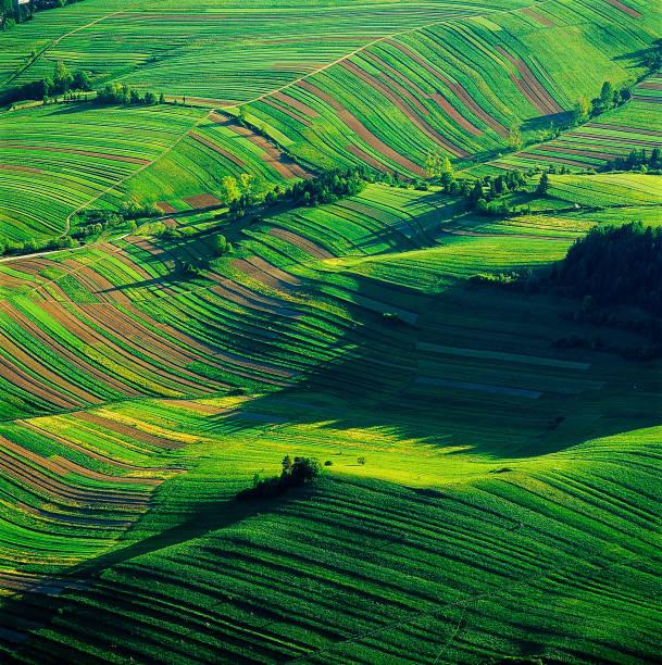 Aerial View Of The Rice Fields, Krocienko nad Dunajcem, Poland
