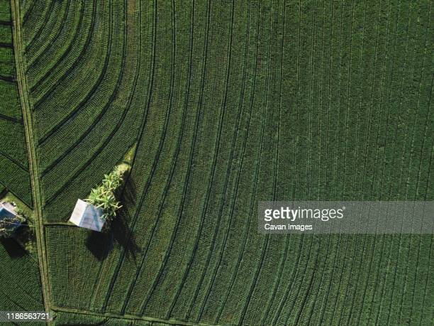 aerial view of the rice fields - 雰囲気 ストックフォトと画像
