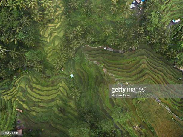 Aerial view of the Tegallalang Rice Terrace