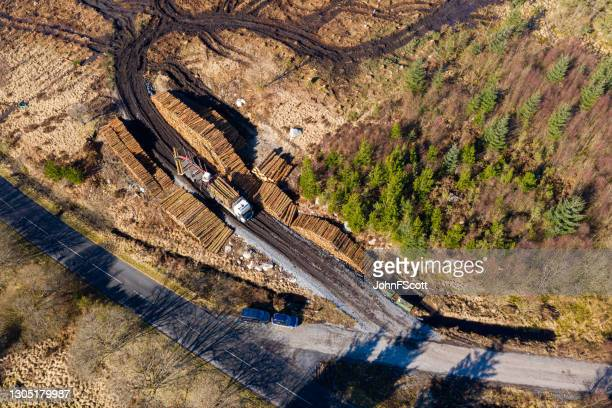aerial view of timber being loaded onto a truck - johnfscott stock pictures, royalty-free photos & images