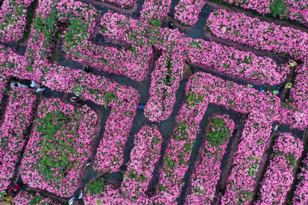CHN: Flower Maze In Zhengzhou