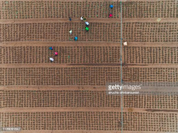 aerial view of tractor driving  soil agricultural plot. - drone point of view stock pictures, royalty-free photos & images
