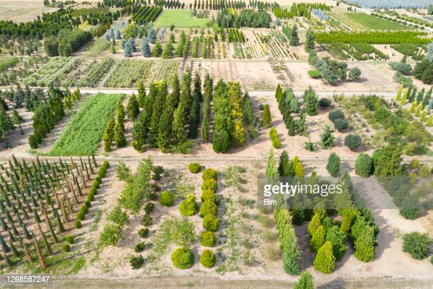 aerial view of tree farm - tree farm stock pictures, royalty-free photos & images
