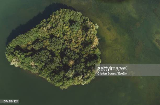 aerial view of trees around sea - bortes stockfoto's en -beelden