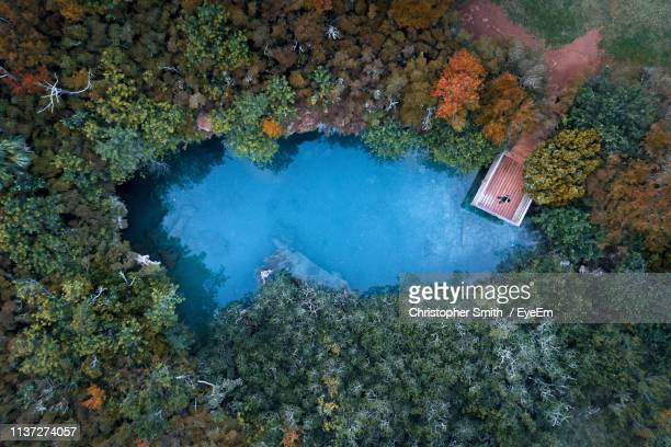 aerial view of trees by lake - bermuda stock pictures, royalty-free photos & images