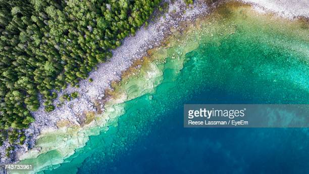 aerial view of trees by sea - küstenlandschaft stock-fotos und bilder