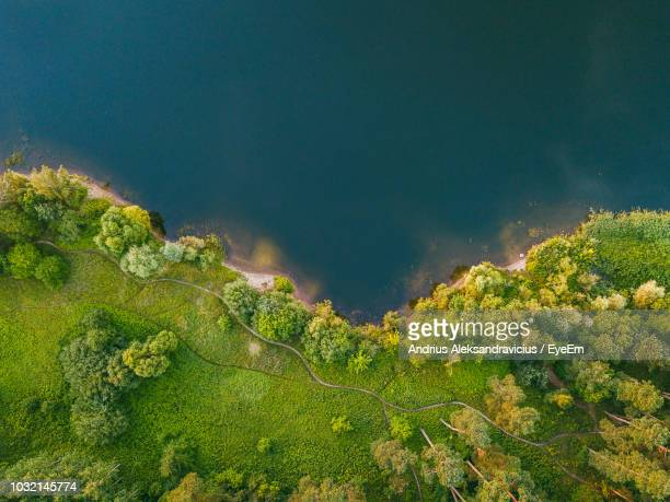 aerial view of trees growing by lake - lakeshore stock pictures, royalty-free photos & images