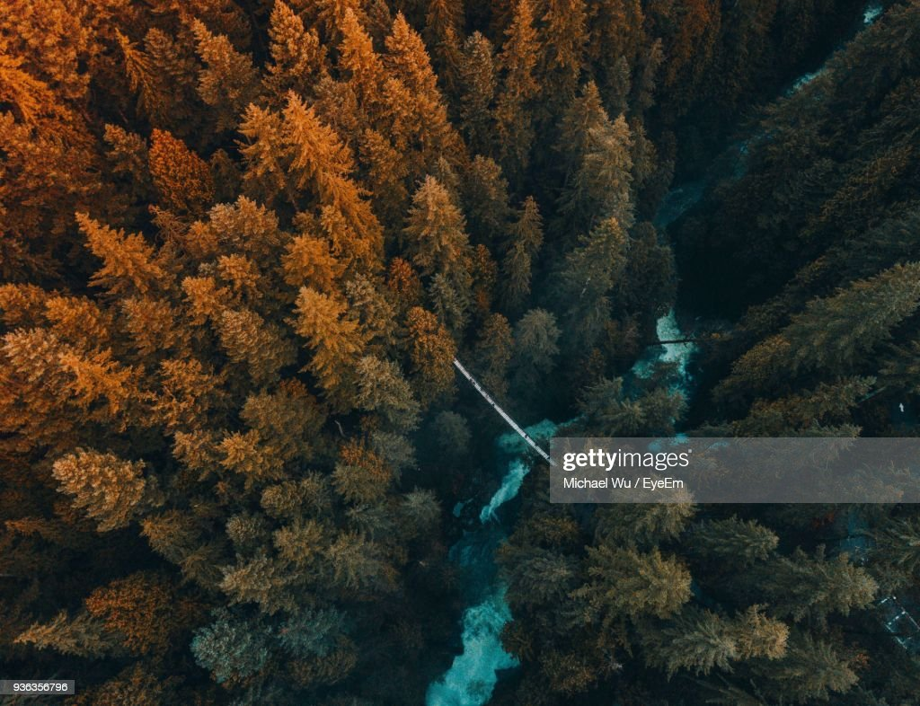 Aerial View Of Trees Growing In Forest : Stock Photo