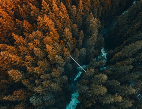 Aerial View Of Trees Growing In Forest - gettyimageskorea