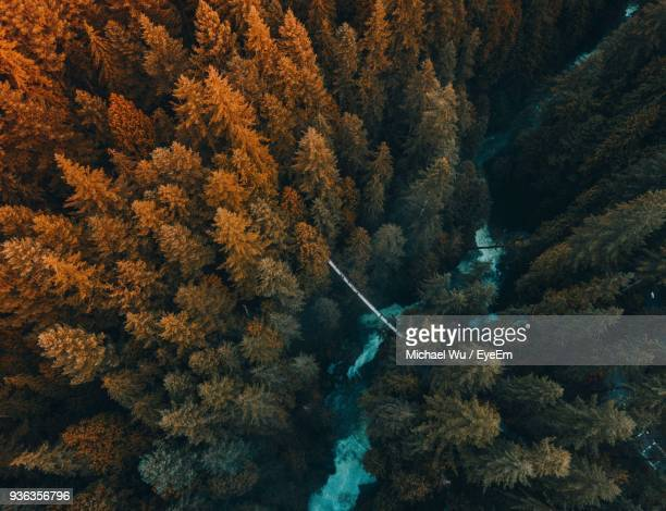 aerial view of trees growing in forest - vancouver canada stock photos and pictures