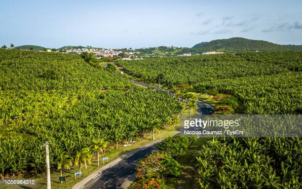 aerial view of trees growing on landscape against sky during sunny day - french overseas territory stock pictures, royalty-free photos & images
