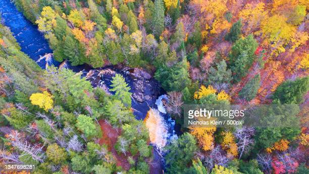 aerial view of trees in forest during autumn - klein stock pictures, royalty-free photos & images