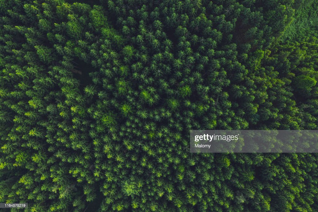 Aerial view of trees in forest. : Stock-Foto