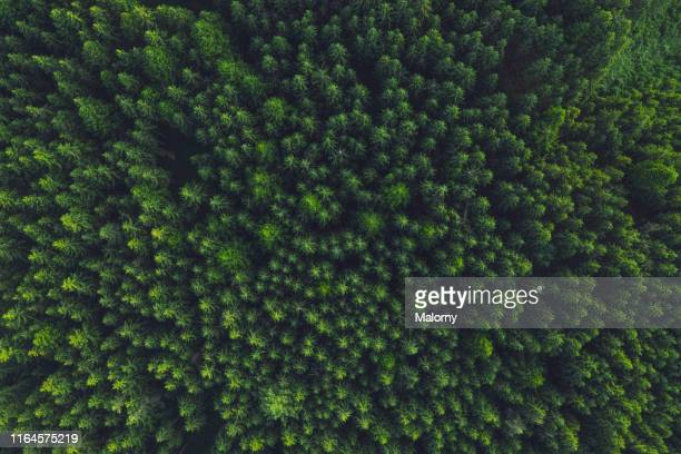 aerial view of trees in forest. - sopra foto e immagini stock
