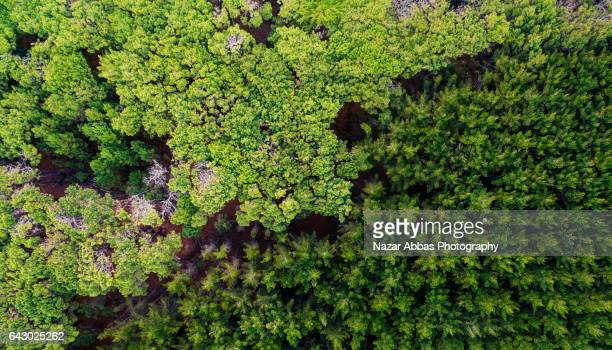Aerial View Of Trees.