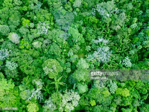 aerial view of treetops in amazon rainforest - lush stock pictures, royalty-free photos & images