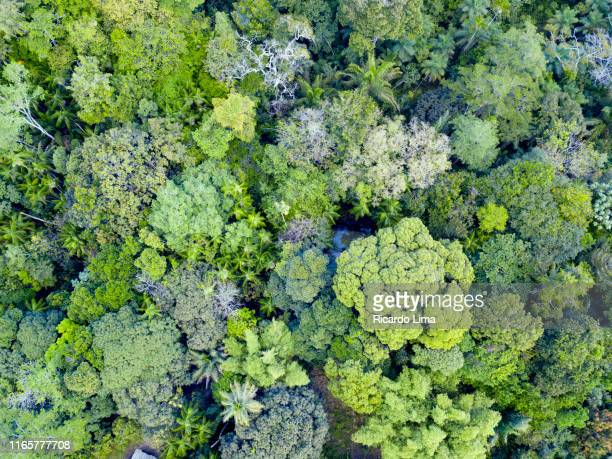 aerial view of treetops in amazon rainforest - amazonia imagens e fotografias de stock