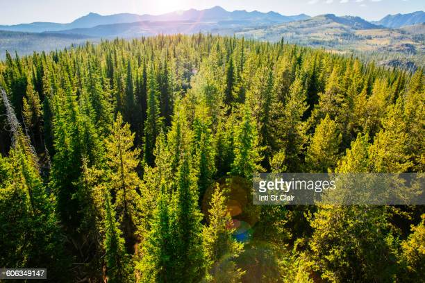aerial view of treetops in remote forest - treetop stock pictures, royalty-free photos & images