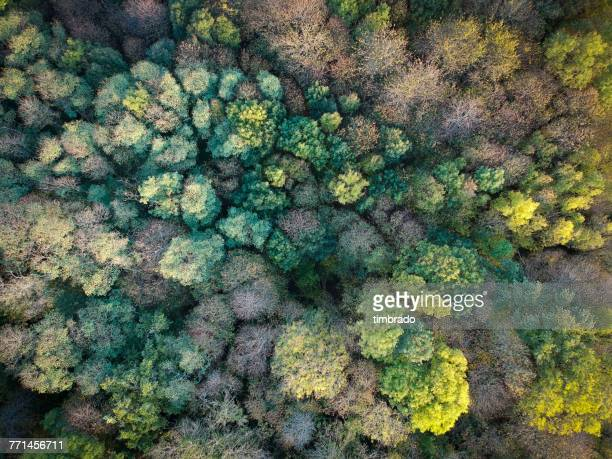 Aerial view of treetops, Niort, France