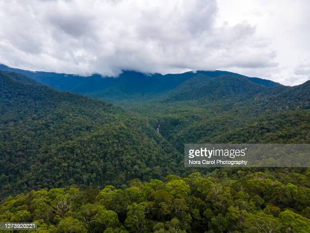 aerial view of tropical rainforest in sabah borneo malaysia - dipterocarp tree stock pictures, royalty-free photos & images