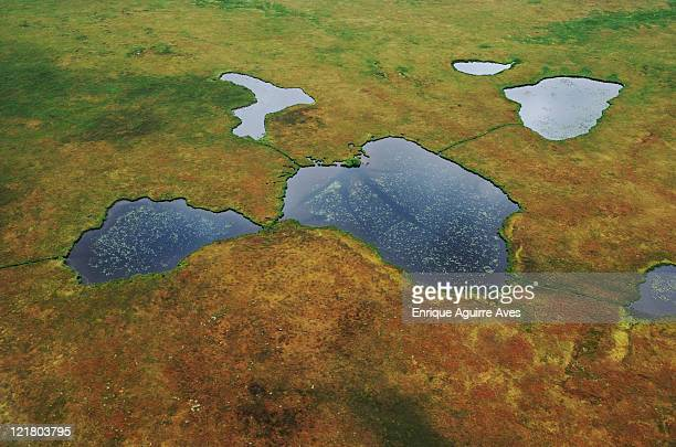 aerial view of tundra and lilly pond with animal trails, nushagak, alaska, usa - permafrost stock pictures, royalty-free photos & images