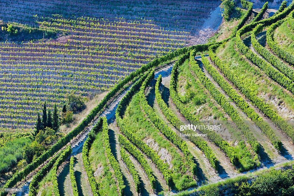 Valpolicella Weinberge von oben, Italien : Stock-Foto