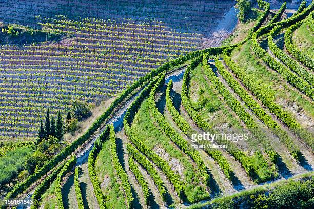 Aerial view of Valpolicella Vineyards in Italy