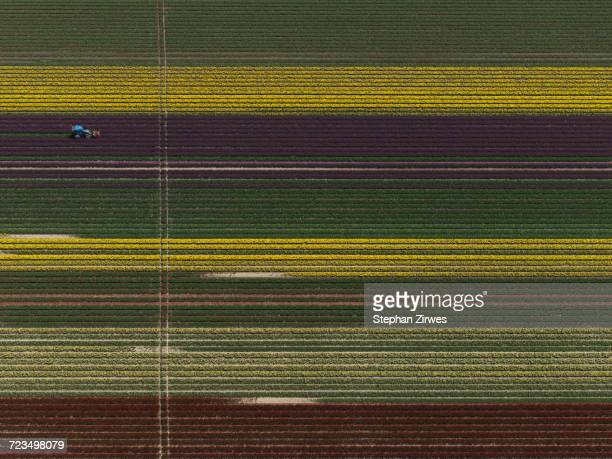 Aerial view of various crops in agricultural field, Stuttgart, Baden-Wuerttemberg, Germany