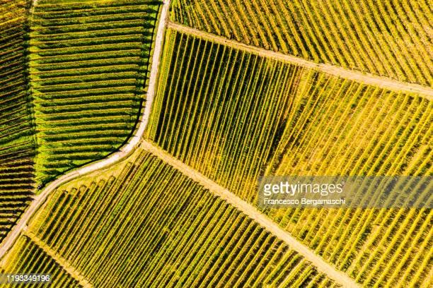 aerial view of vineyard textures in autumn. - italia ストックフォトと画像