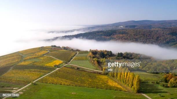 Aerial view of vineyards and fog in the Rheingau