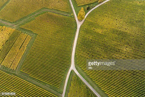 Aerial view of vineyards and fork in the road