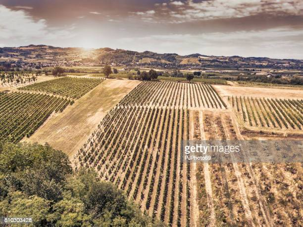 Aerial view of vineyards in Piedmont at sunset - Italy