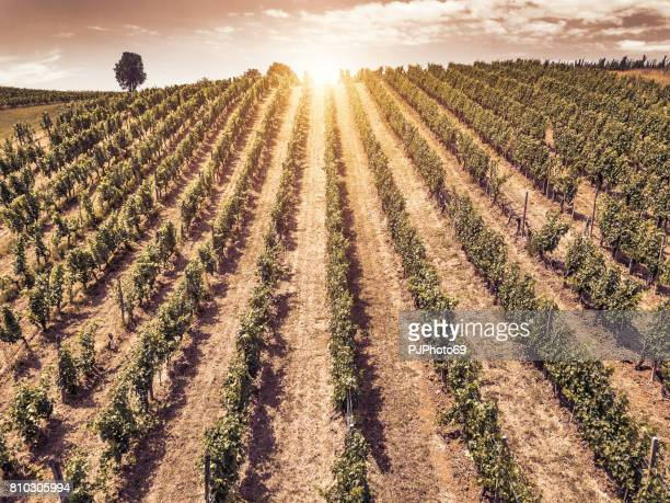 aerial view of vineyards in piedmont at sunset - italy - parallel stock photos and pictures