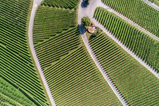 Aerial view of vineyards, Oberkrich, Germany, Europe - gettyimageskorea