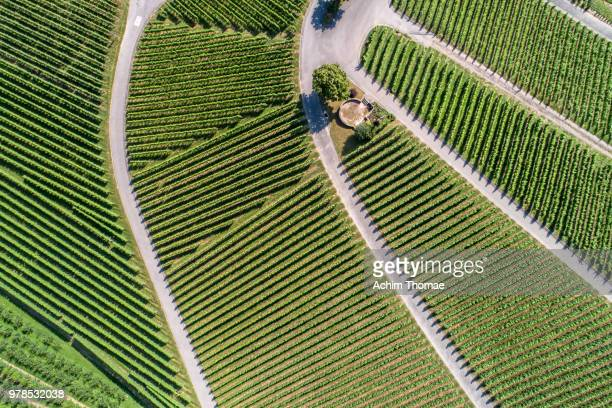Aerial view of vineyards, Oberkrich, Germany, Europe