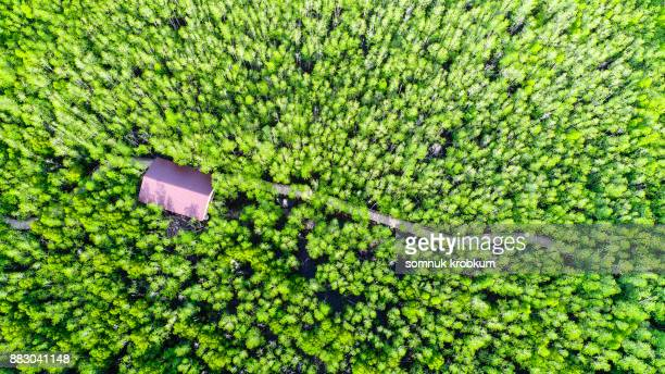 Aerial view of walkway in mangrove forest