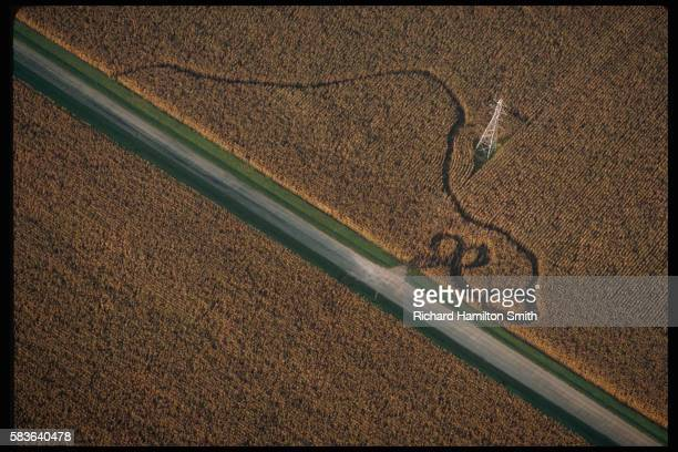 Aerial View of Wandering Tracks Through Cornfield