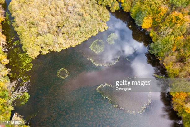 aerial view of water lilies forming geometric shapes in the middle of the étang de commelles - hauts de france stock photos and pictures