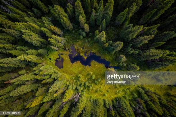 aerial view of wetlands - british columbia stock pictures, royalty-free photos & images