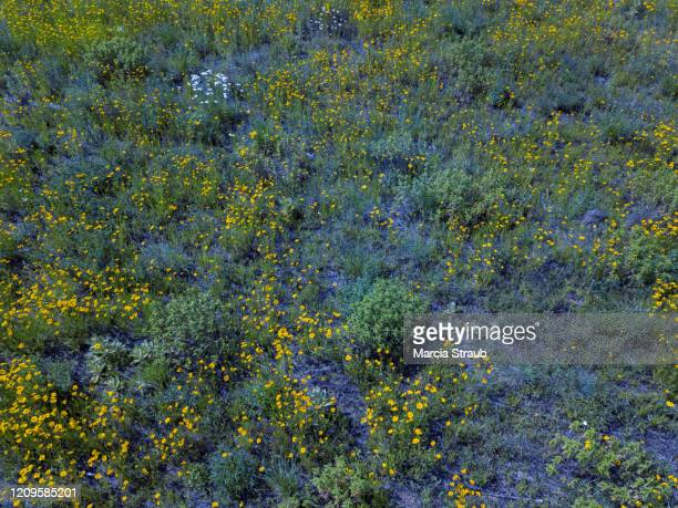 aerial view of wild prairie flowers in the field - grass area stock pictures, royalty-free photos & images