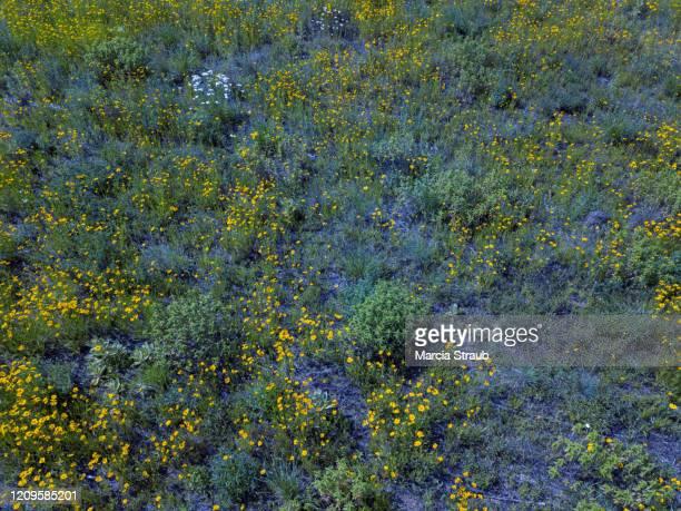 aerial view of wild prairie flowers in the field - fleurs des champs photos et images de collection