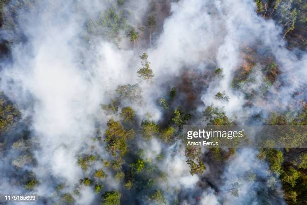 aerial view of wildfire in forest. burning forest and huge clouds of smoke - environmental damage stock pictures, royalty-free photos & images