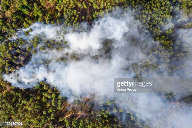 aerial view of wildfire in forest. burning forest and huge clouds of smoke - シベリア ストックフォトと画像
