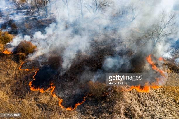 aerial view of wildfire on the field. huge clouds of smoke - hierba familia de la hierba fotografías e imágenes de stock