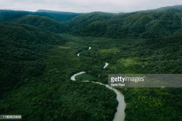 aerial view of winding river in jungle with mountains, iriomote island, okinawa, japan - 自然美 ストックフォトと画像