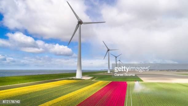Aerial view of windturbines and tulip fields in the Netherlands