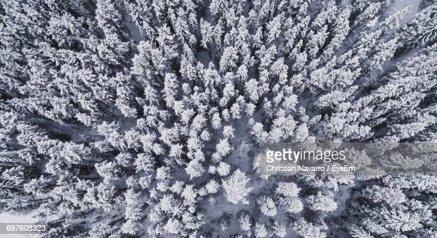 aerial view of winter forest - treetop stock photos and pictures