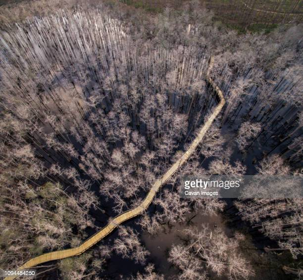 aerial view of wooden footbridge amidst trees over swamp at pine log state forest - pine log state forest stock photos and pictures