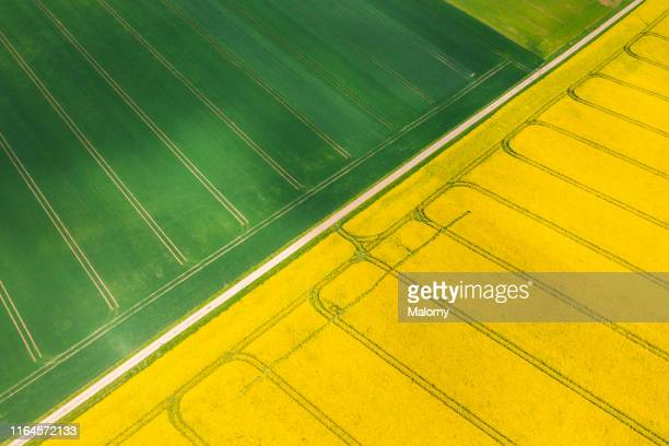 aerial view of yellow blooming rape fields. drone view. biomass. - crop plant stock pictures, royalty-free photos & images